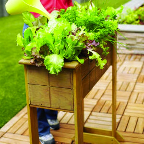 DIY Saladbox Sunset